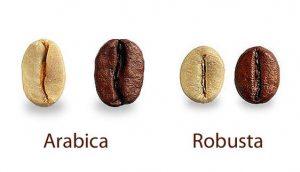 phân biệt arabica vs robusta tại Lâm Đồng