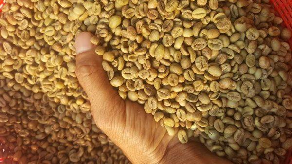 Cơ sở chế biến cà phê Honey process tỉnh Lâm Đồng