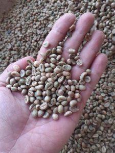 cà phê robusta Lâm Đồng