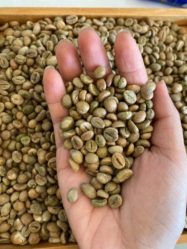Hạt cà phê Lâm Đồng